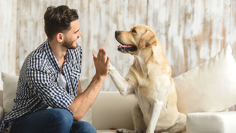 hund stress symptomer