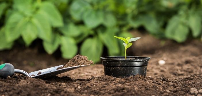 Gør dine have grønnere og mere bæredygtig