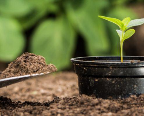 Det er vigtigt at overveje bæredygtighed i haven