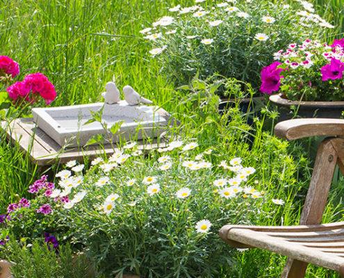 træ havestol med krukker